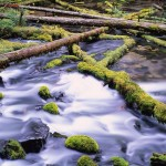Logs and other debris in a river
