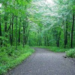 Smooth path in green woods