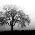 Bare tree on a grey day