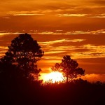 Orange sunrise and silhouetted trees