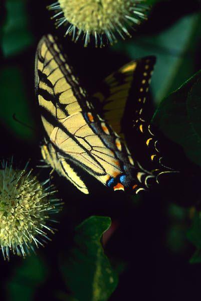Butterfly-change a pattern