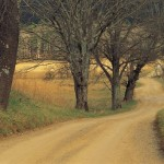 Dirt road and trees
