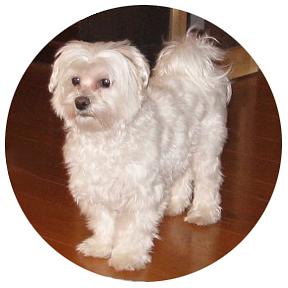Animal Companions Enhance and Deepen Self Care Time