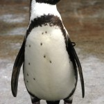 Penguin 2.0 and SEO: Don't be Scared, But This Information is Well Worth Your Time!