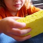 Sponge Activities