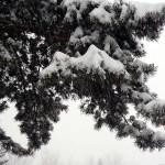 Snow Sudden Change