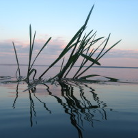 Reflection on Water