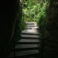 Steps into Light