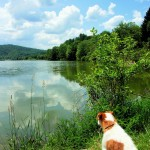 Dog and Lake