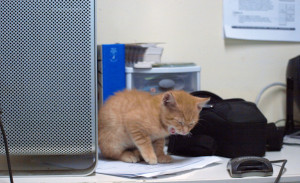 Yawning Computer Cat