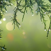 Holidays Greenery Picture