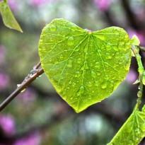 Heart Leaf Reclaim Your Joy