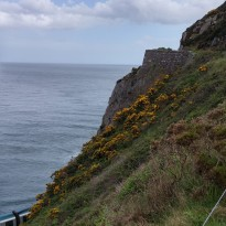 Irish Coast near Bray
