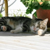 Cat Nap-Afternoon Slow-Down