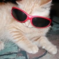 Cat-Glasses Time-Saving App