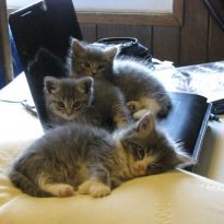 Kittens and Gadgets