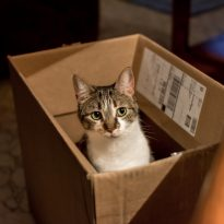 Dropbox-Cat-in-Box