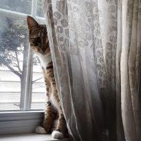 Cat-curiosity