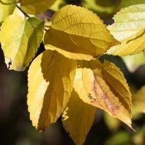 autumn-leaf-seasonal-change