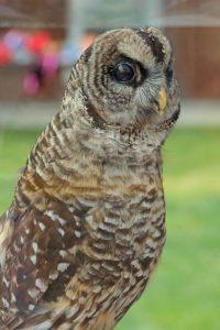 Owl-smart planning