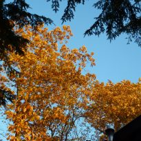 Autumn trees-energy changes
