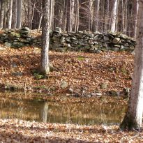Woodland Gratitude