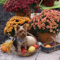 dog-holidays-boundaries
