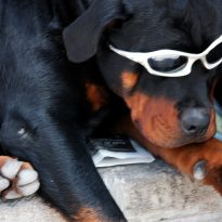 Dog Reading-Mercury Reader