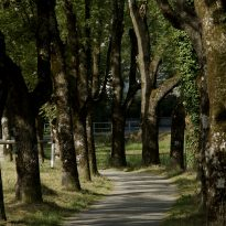 Internal values path