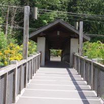 Transitions Bridge2
