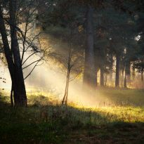 solstice sunbeams forest