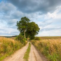 Your Time Choices and the Wisdom of The Road Less Traveled