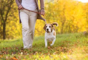 beagle-exercise-woman