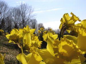 Springtime energy management